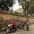 Hanoi Hammock by Shaun Higson
