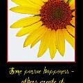 Happiness by Tina Meador