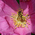 Happy As Can Bee by David Rucker