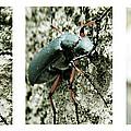 Happy Beetle by Kristina Savasta