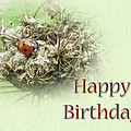 Happy Birthday Greeting Card - Ladybug On Dried Queen Anne's Lace by Mother Nature