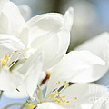 Happy Blossoms by Rachel Duchesne