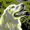 Happy Dog by Marilyn Hunt
