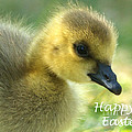 Happy Easter Gosling by Sharon Talson