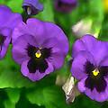 Happy Faces Purple Pansies by Elaine Plesser