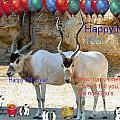 Happy Gnu Year by Arthur Herold Jr