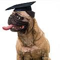 Happy Graduation by Edward Fielding