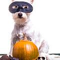 Happy Halloween Dog by Edward Fielding