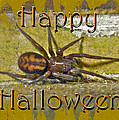 Happy Halloween Spider Greeting Card by Mother Nature