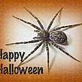 Happy Halloween Spider Greeting Card - Dolomedes Tenebrosus by Mother Nature