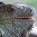 Happy Lizard by Lisa  DiFruscio