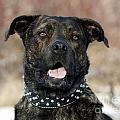 Happy Rescue Pooch by Inspired Nature Photography Fine Art Photography