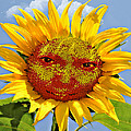 Happy Sunflower by Susan Leggett
