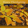 Happy Thanksgiving Beech Leaves by Michael Peychich