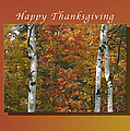 Happy Thanksgiving Birch And Maple Trees by Michael Peychich