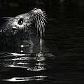 Harbor Seal by J Michael Elliott