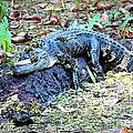 Hard Day In The Swamp - Digital Art by Carol Groenen