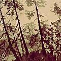 Harmony Ridge by Kitty Meekins