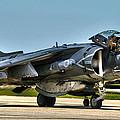 Harrier by Mitch Cat