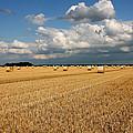 Harvest by Ralf Kaiser