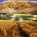 Harvest Time by Robert Bales