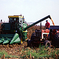 Harvesting Corn by Photo Researchers