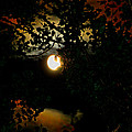 Haunting Moon IIi by Jeanette C Landstrom