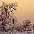 Frost 2 by Linsey Williams