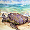 Hawaiian Green Turtle by Vincent Callagher