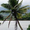 Hawaiian Palm by Athena Mckinzie