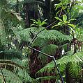 Hawaiian Rainforest by G. Brad Lewis