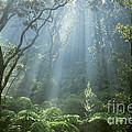 Hawaiian Rainforest by Gregory Dimijian MD