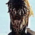 Hawk 3 by Joe Faherty