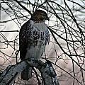Hawk 6 by Joe Faherty