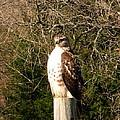 Hawk Post by K Marie
