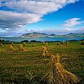 Hay Bales In A Field, Ireland by The Irish Image Collection