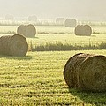 Hay Bales In Mist At Sunrise by Yves Marcoux