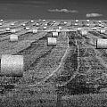 Hay Bales On A Farm In Alberta by Randall Nyhof