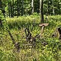 Hay Cutter 2 by Douglas Barnett