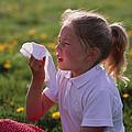 Hay Fever by Damien Lovegrove