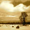 Hay Field by Arthur Barnes