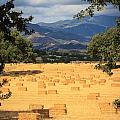 Hay Field With Mountain Background by Dina Calvarese