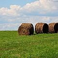 Hay Hay Hay by Mark Bowmer