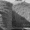 Hay by Michelle Powell