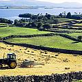 Hay Making, Lough Corrib, Co Galway by The Irish Image Collection