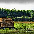 Hay Ride by Joan  Minchak
