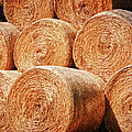 Hay There by Joan Carroll