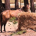 Hay's For Horses by Michelle Powell