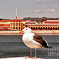 hd 384 hdr - Lone Seagull by Chris Berry