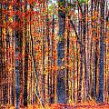 Hdr- Autumn Leaves by Joe Myeress
